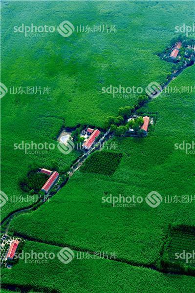 图片关键字:航拍,淄博,恒台,马踏湖,风景区,生态旅游,自然风光,山东