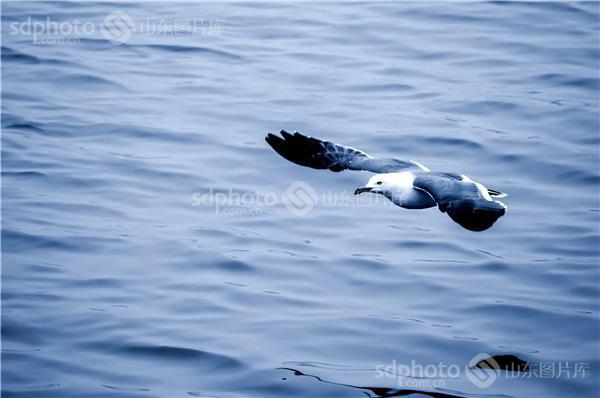 一群海鸥简笔画步骤