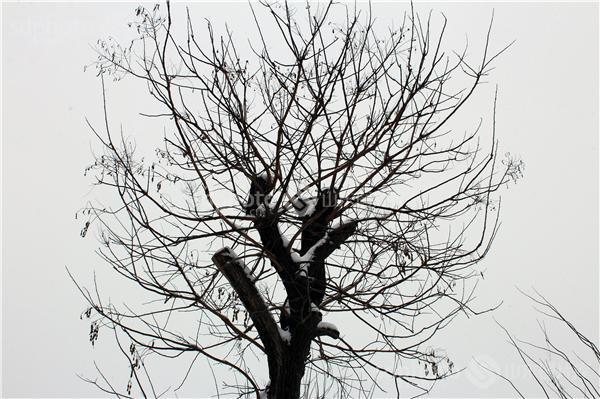 素描大树的画法
