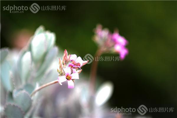 jpeg:3mb 图片说明:今年元旦,我去了新加坡植物园,这里是热带岛屿繁茂