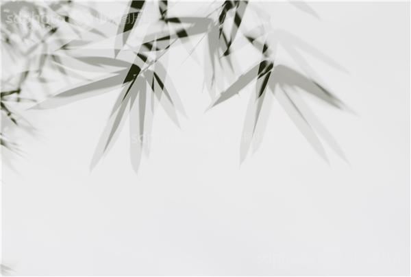 竹子,竹子写意,多重曝光,竹子装饰画,装饰画素材,竹影,黑白照片,竹叶