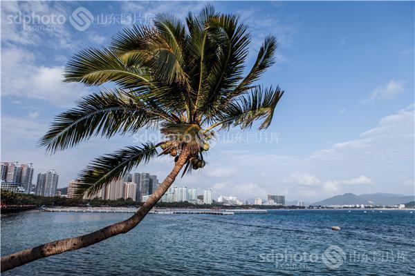图片关键字:三亚,三亚旅游,海南,海南三亚,海南旅游,海滨城市,椰子树