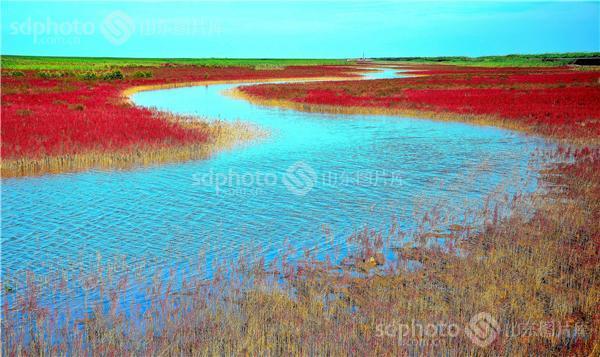 山东东营黄河口生态旅游区湿地风光