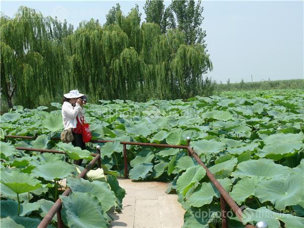 图片关键字:淄博,桓台县,桓台马踏湖,省级风景名胜区,省级生态功能
