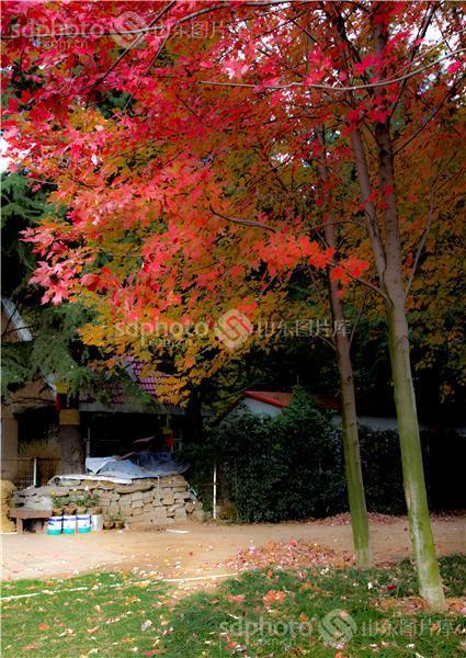 图片关键字:中山公园,青岛,秋天,秋季,秋,秋色,植物,生态,树林 组图