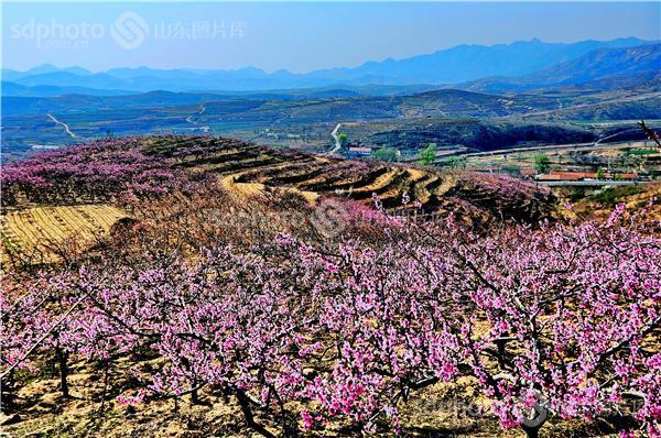 山,春天,自然资源,生态环境,威海,春晖,春光,乡村,山村,村庄,风光