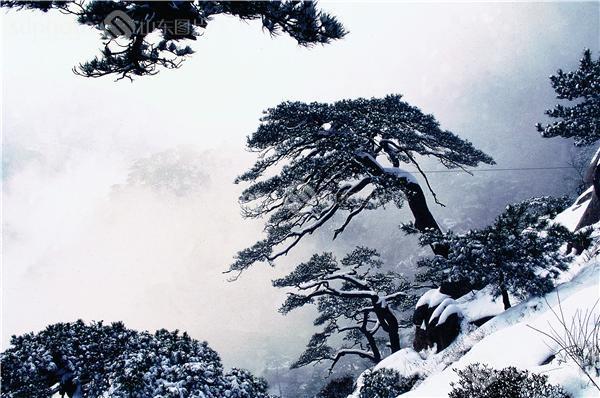 图片关键字:泰安,泰山,后石坞,古松园,松涛,松树,松,树,绿树,风景