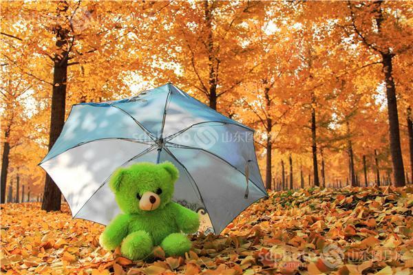 图片编号:216601 图片分类:自然资源生态环境 图片地区:临沂 下载图尺寸:5184*3456 下载图大小:JPEG:5MB 图片说明:临沂银杏林中的小熊。 图片关键字:临沂,银杏,银杏林,银杏树,黄树叶,森林,落叶,树叶,树林,白果树,休闲,田园风光,风景区,景点,秋天,秋景,秋色,小熊,清新,小清新,伞,雨伞  组图编号:129255 组图名称:临沂银杏林 组图说明:临沂银杏林。 组图关键词:临沂,银杏,银杏林,银杏树,黄树叶,森林,落叶,树叶,树林,白果树,休闲,田园风光,风景区,景点,摄影,风