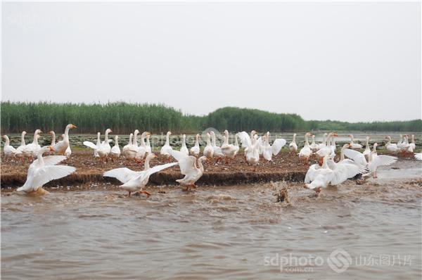 泰安东平县东平湖风景区