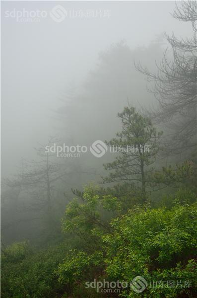 鲁山国家森林公园,博山风景旅游区,景区,景点,淄博旅游,旅游,雾,大雾