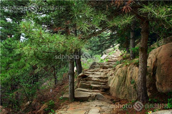 图片关键字:旅游,九龙大峡谷,房干,莱芜,景区,风光摄影,植物,小路