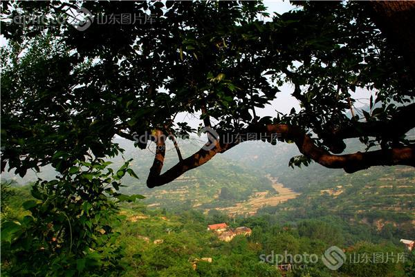 淄川,峨庄,云明山,天然氧吧,人文景观,自然景观,云明山原始森林风景区