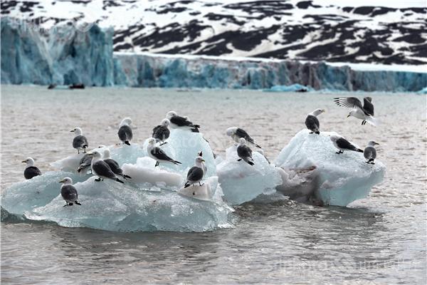 图片编号:236003 图片分类:世界之窗世界之窗 图片地区:无 下载图尺寸:5000*3333 下载图大小:JPEG:1MB 图片说明:生活在北极的鸟儿。 图片关键字:北极,极地,鸟,鸟类,鸟儿,动物,北极鸟,北极鸟类,北极动物,冰川,冰,野生,野生动物,冰雪,水面,河面,河水  组图编号:130306 组图名称:北极鸟类 组图说明:北极既是鸟类的王国,也是鸟类的天堂。一提起鸟类,立刻会激起人们无尽的联想。它们那光彩斑斓的羽毛,婉转的歌喉,和谐的群体,温暖的巢穴,长途的迁涉部令人类为之羡慕不已。众所周知