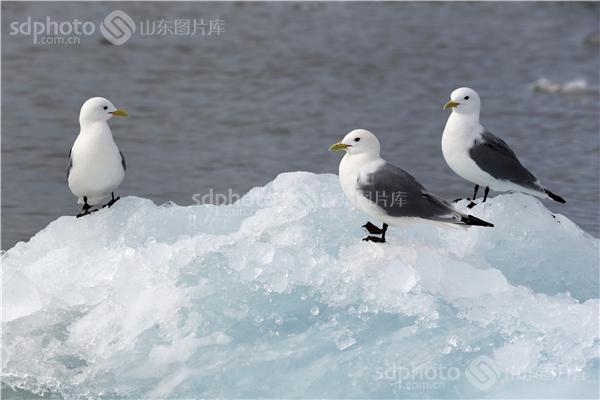 什么动物在北极