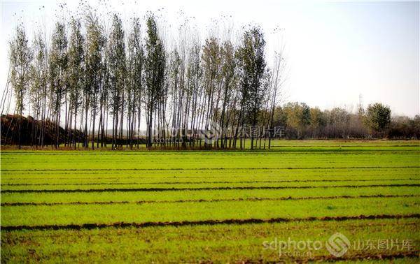图片说明:鲁西南农村田野风光
