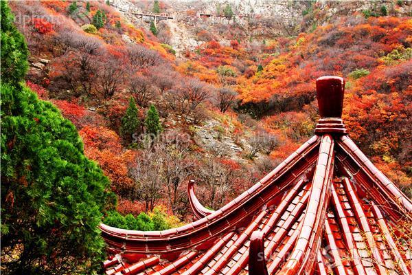 图片关键字:潍坊,临朐,石门坊,风景,景区,旅游,红叶,金秋,秋,秋天