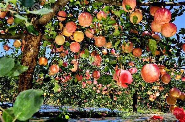 秋天果园丰收图片边框