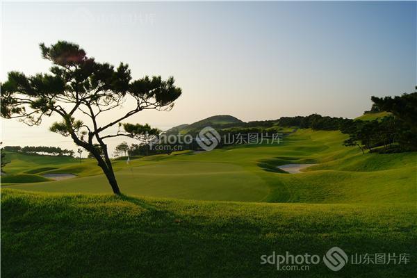 威海远遥高尔夫球场的青松