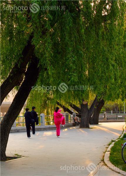 图片关键字:青岛,即墨,墨河公园,公园,晨练,城市风光,清晨,春天,早晨