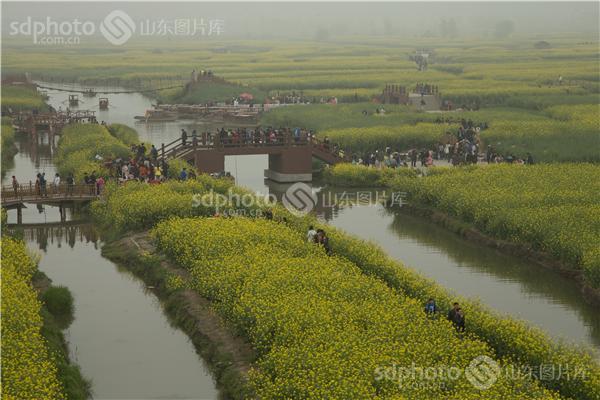 江苏泰州兴化千垛油菜花景区