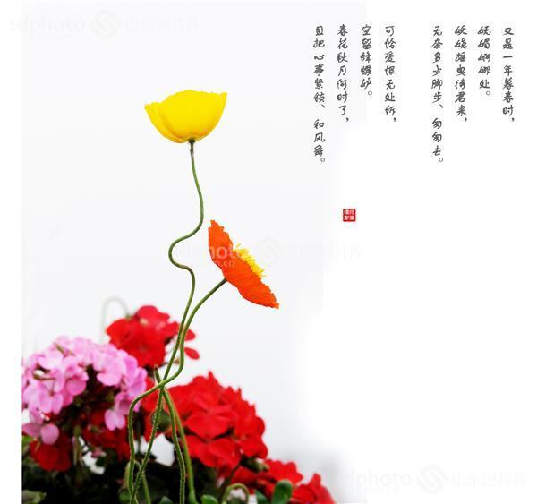 图片关键字:虞美人,春天,春,春花,春季,春景,花草,装饰画素材,花