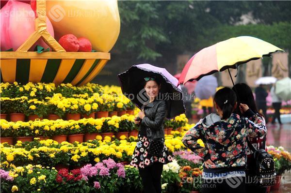 青岛中山公园菊展开幕 游人雨中赏花兴致浓