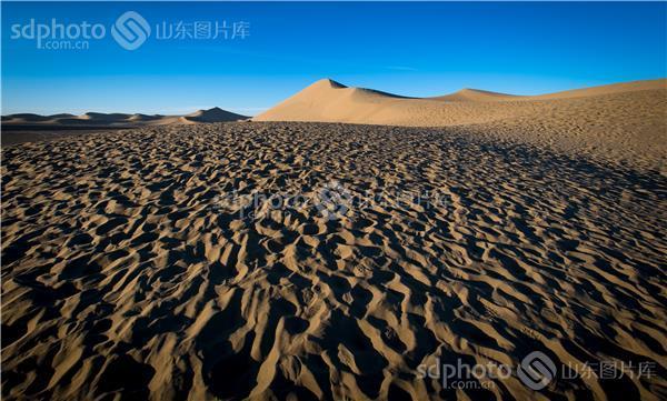 组图名称:沙漠骆驼