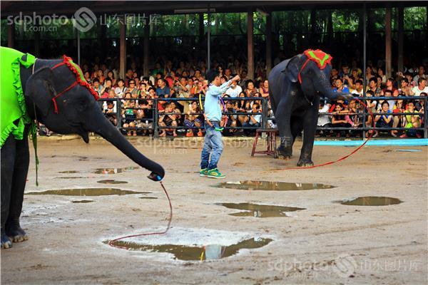 生物界最大的陆地动物大象