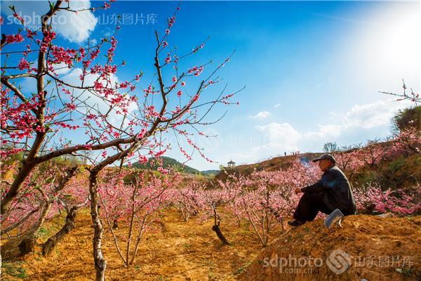 泰安市 肥城市 刘台 刘台风景区 景区 景点 桃园 桃树 桃林 花 春