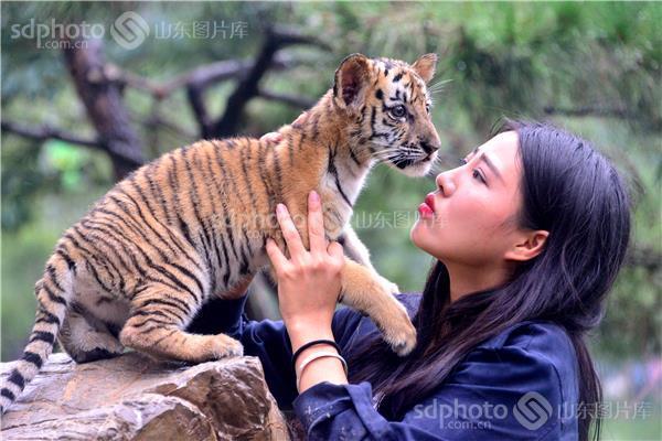 山东聊城:动物园东北虎与游客嬉戏萌呆了