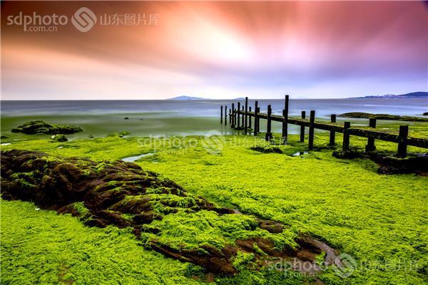 图片关键字:生态,浒苔,会场木栈道,青岛 青岛市 海上草原 生态环境