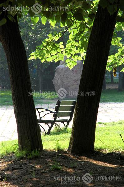 拍摄于中山公园,好休闲  图片关键字:大树,绿叶,长椅,草地,影子,青岛