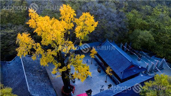 枣庄峄城青檀寺秋天的风景